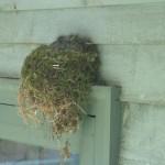 """may my heart always be open to little birds"" – an e.e. cummings Pocket Poem"